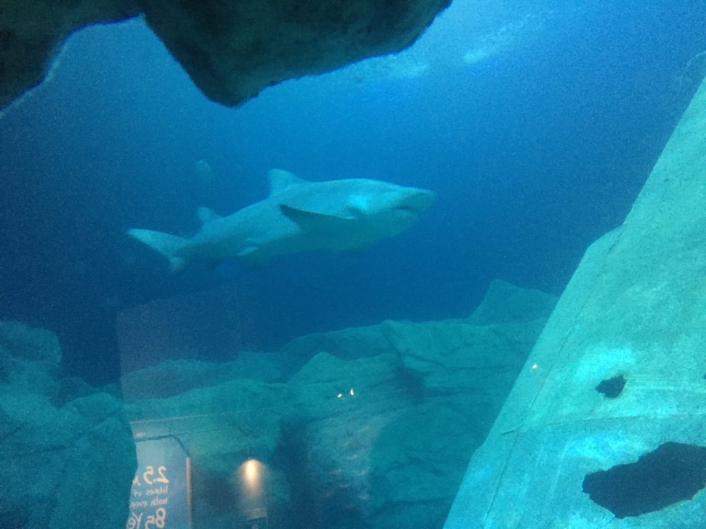 Shark at Aquarium