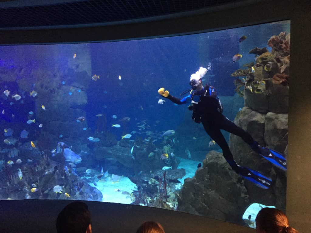 Diver at Plymouth Aquarium